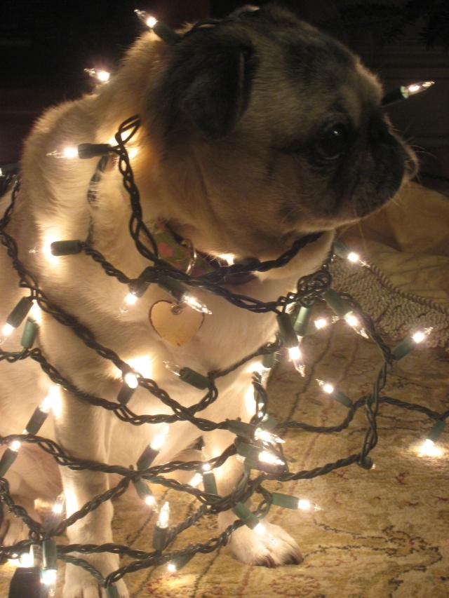 Lighted Pug